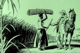 Brasil's Democracy & A Return To The Senzala